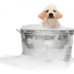 Cuidados com seu pet no banho e tosa