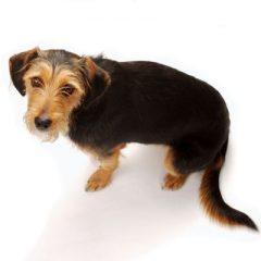 Tudo o que você precisa saber sobre Sarna Sarcóptica em cães!