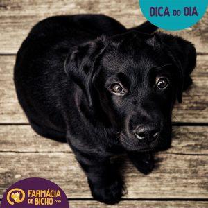 Imagem Dica do dia - Dor nos Pets