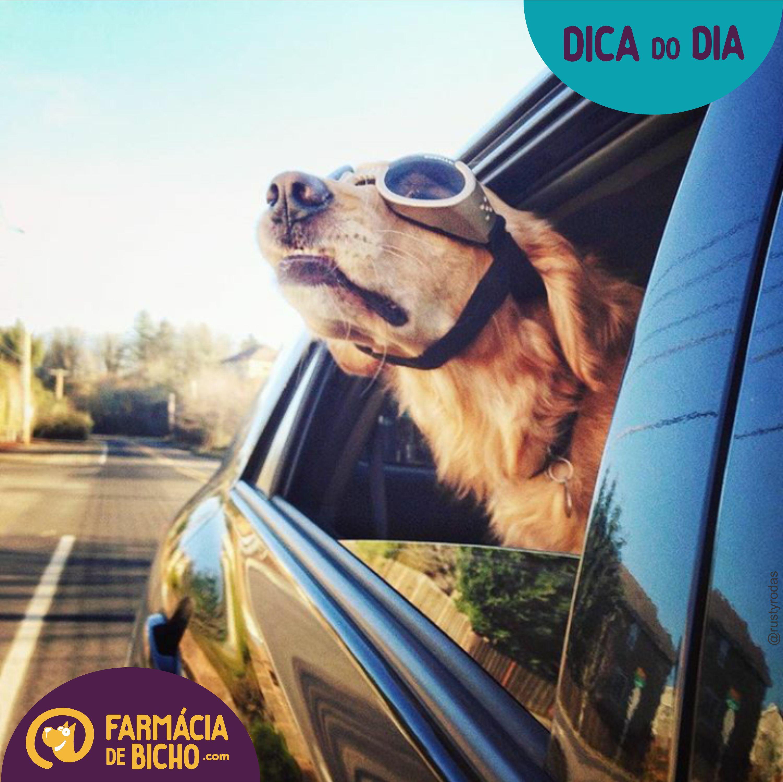 Imagem viajar de carro com seu pet