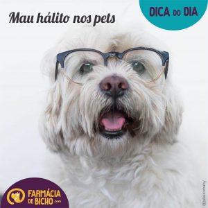 mau-halito-nos-pets