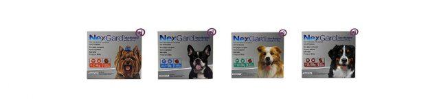 Nexgard para tratamento de sarna em cachorro