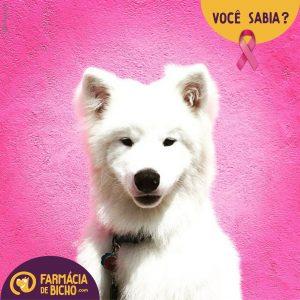 cancer-de-mama-nos-pets-voce-sabia