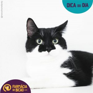 escabiose-felina-dica-do-dia