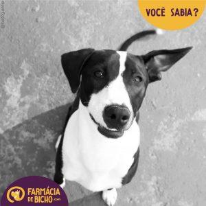 leishmaniose-visceral-canina-voce-sabia