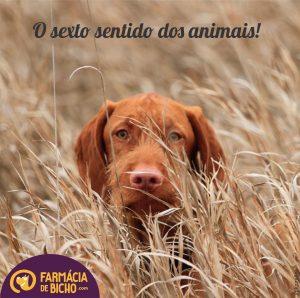 o-sexto-sentido-dos-animais