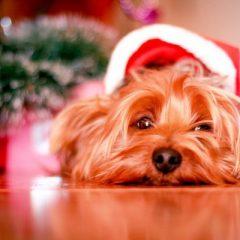 Festa de Natal e os cuidados com os bichos