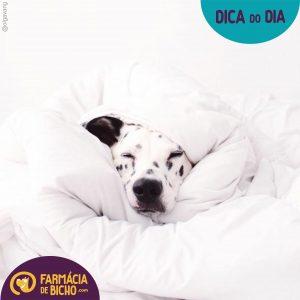 doença-do-carrapato-babesiose-canina