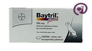 Imagem Baytril Flavour 250mg 6 comp. Antibiótico Cães