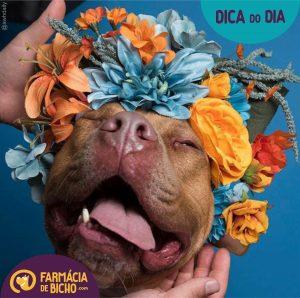 carnaval-bom-para-cachorro
