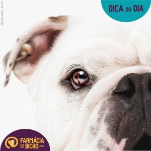 doenças-oftalmologicas-nos-pets