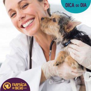 importancia-de-levar-seu-pet-ao-medico-veterinario