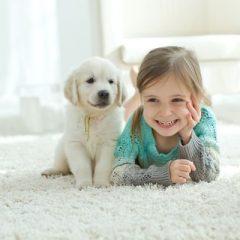 Dúvidas frequentes de donos de pets