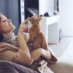 Vantagens de se ter um gato, cuidados, mitos e verdades