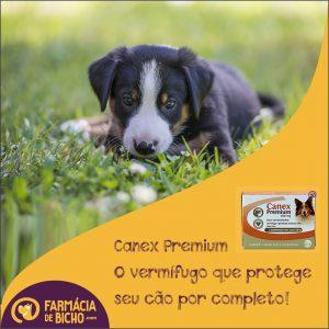 canex-premium-vermifugo-ceva