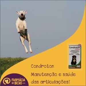 condroton-suplemento-articulacao