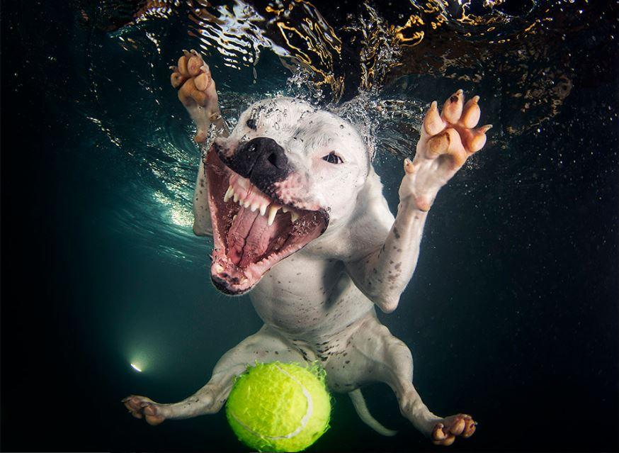 cachorro-mergulhando-1