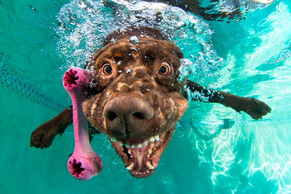 cachorro-mergulhando-2