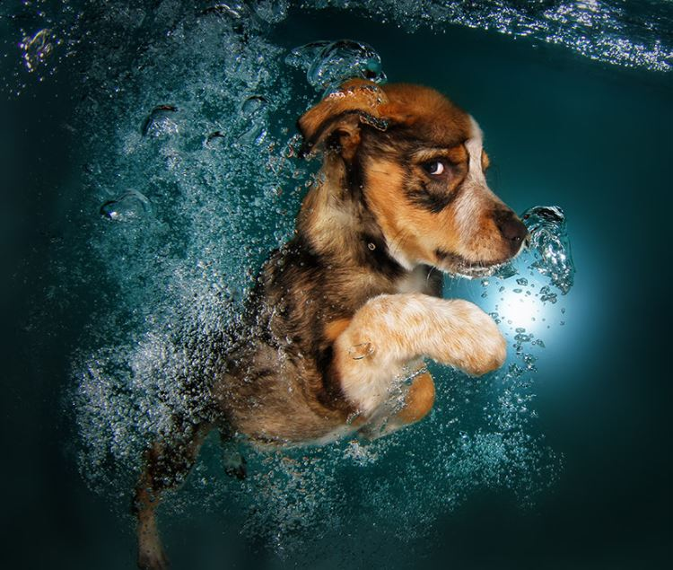 cachorro-mergulhando-3