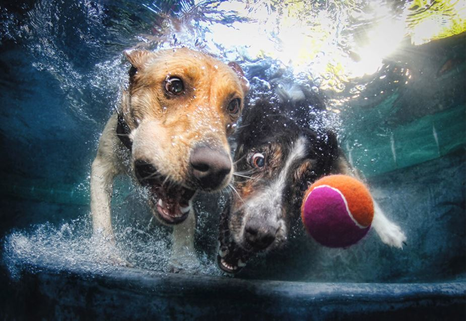 cachorro-mergulhando-5