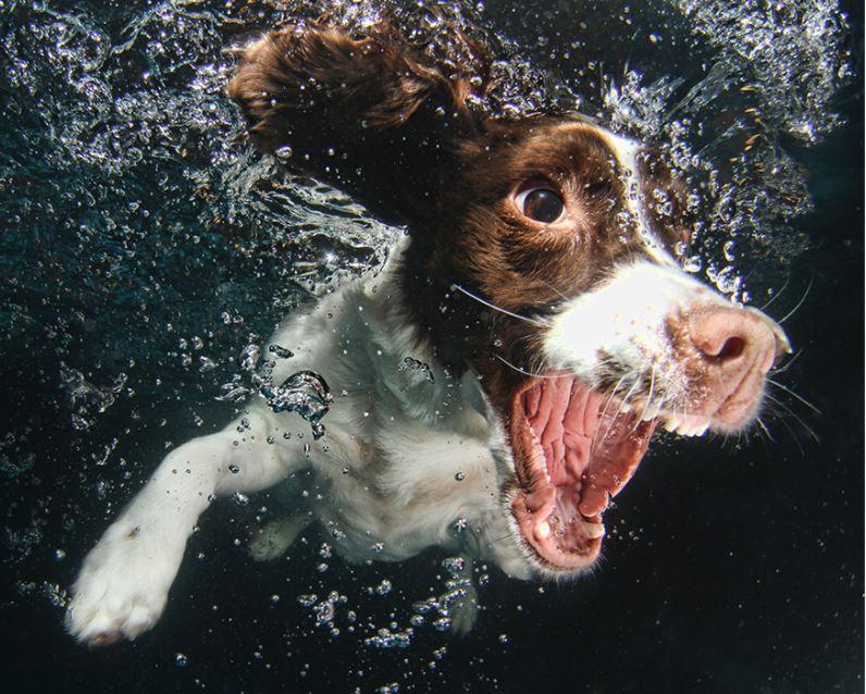 cachorro-mergulhando-7