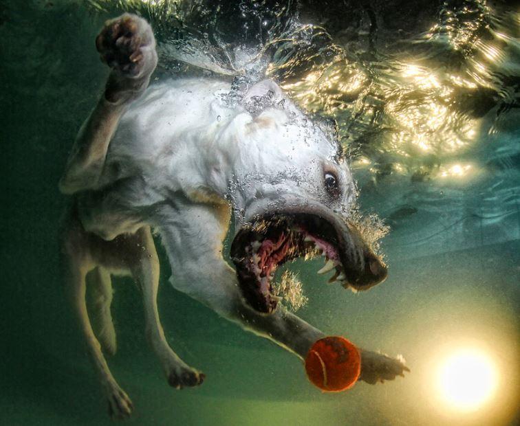 cachorro-mergulhando-8