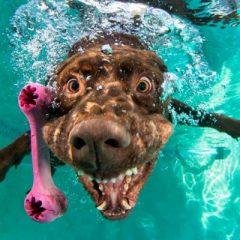 10 imagens incríveis de cachorros mergulhando