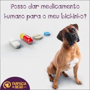 medicamento-humano-para-meu-cachorro-ou-gato