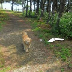 Cachorro segue aparelho do Google Street View, veja as fotos