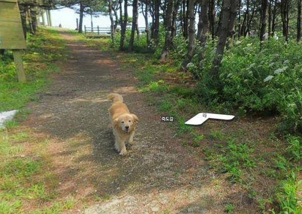 cachorro-segue-aparelho-do-google-street-view-veja-as-fotos-1