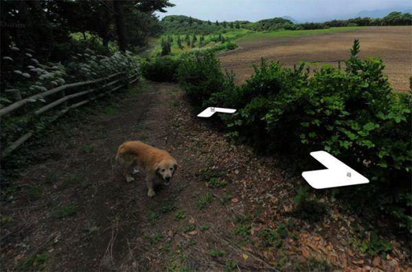 cachorro-segue-aparelho-do-google-street-view-veja-as-fotos-2