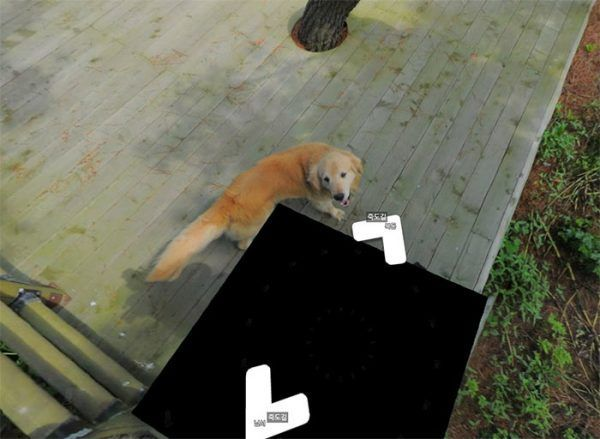 cachorro-segue-aparelho-do-google-street-view-veja-as-fotos-3