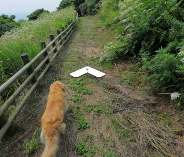 cachorro-segue-aparelho-do-google-street-view-veja-as-fotos-4