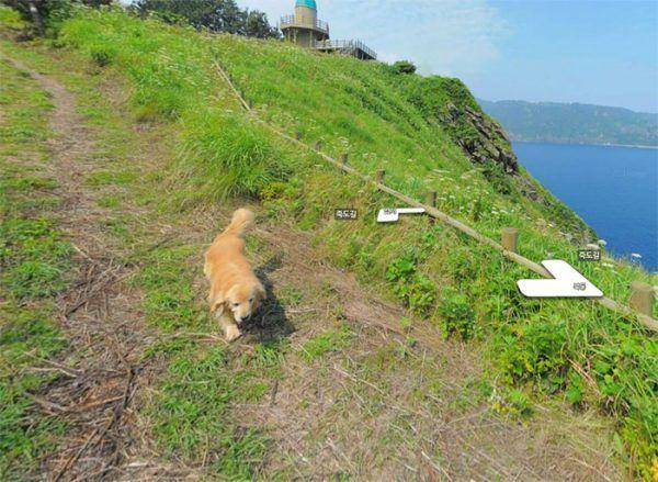 cachorro-segue-aparelho-do-google-street-view-veja-as-fotos-5