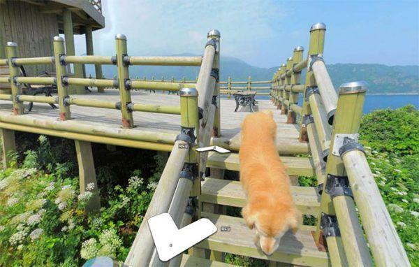 cachorro-segue-aparelho-do-google-street-view-veja-as-fotos-6