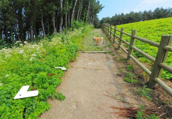 cachorro-segue-aparelho-do-google-street-view-veja-as-fotos-7