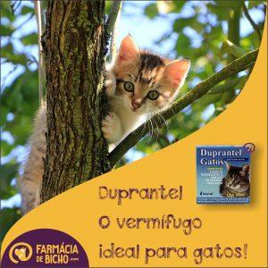 duprantel-gatos-vermifugo-duprat