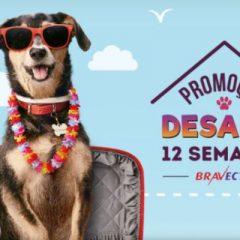 Concorra a uma viagem com seu cachorro – Promoção Bravecto