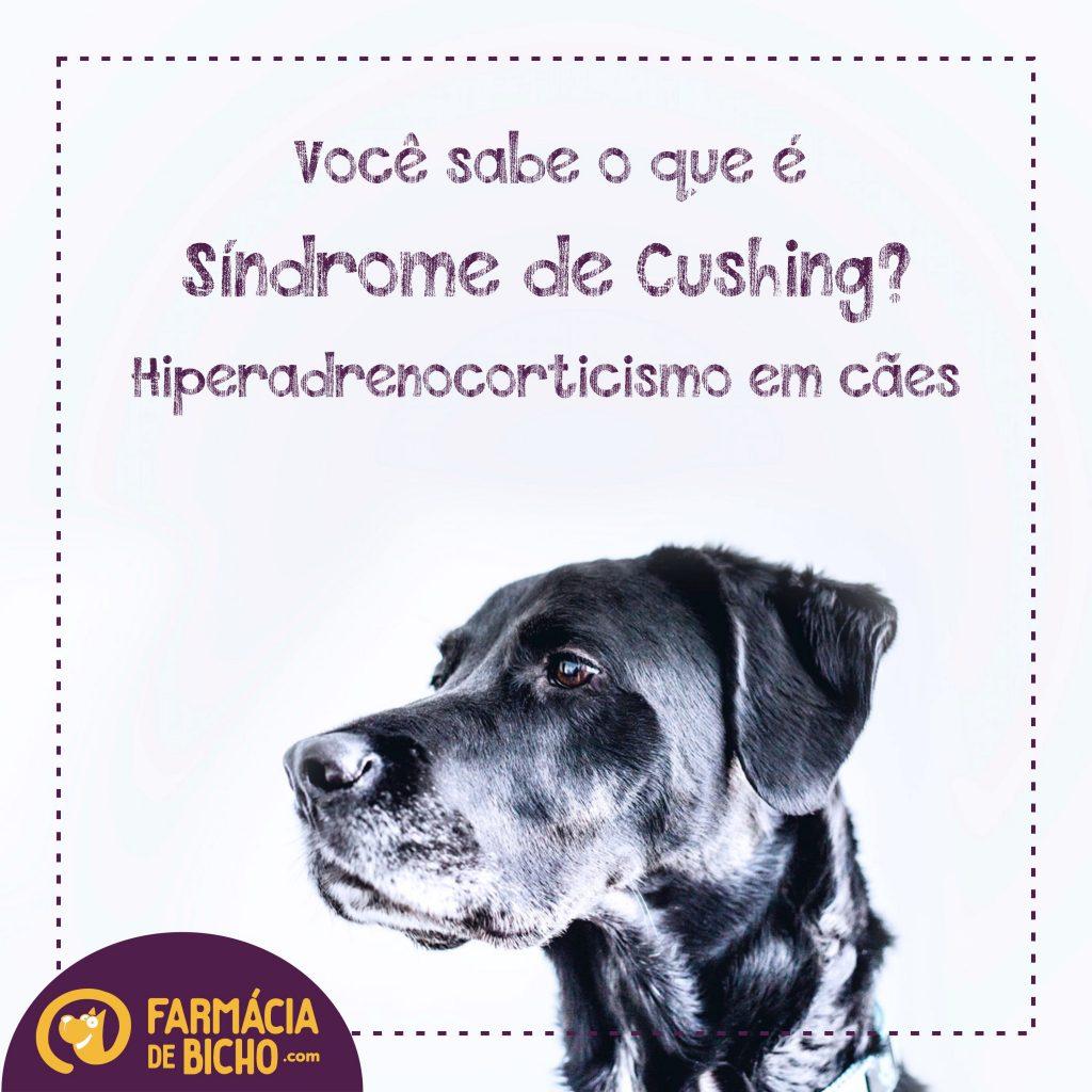 sindrome-de-cushing-hiperadrenocorticismo-em-caes