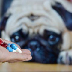Qual a importância do vermífugo para cães e gatos?