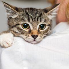 Entenda mais sobre a Síndrome Urológica Felina