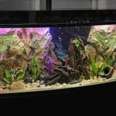 Qual aquário comprar?