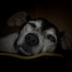 Saiba como cuidar de um cão cego