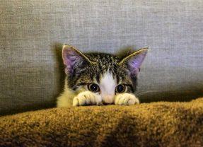 Os perigos da esporotricose para seu gato