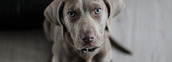 Saiba como proteger as articulações do seu cãozinho