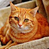 4 doenças que seu gato pode passar para você
